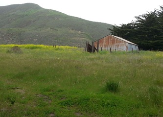 Photo of field at Sarbones / Garapata Park, Big Sur, by Linda A. Levy